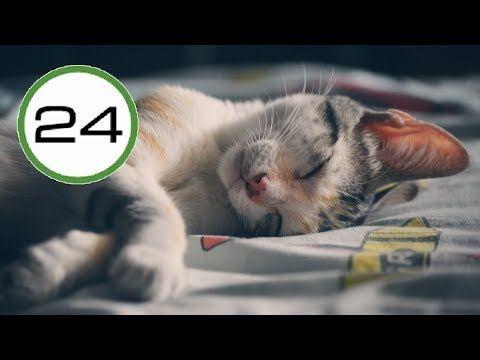 Remedio giardia gatos, Remedy a pikkelysomor bor sapka - dunamaraton.hu