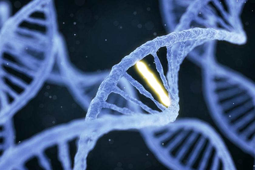 zsírégető genetika)