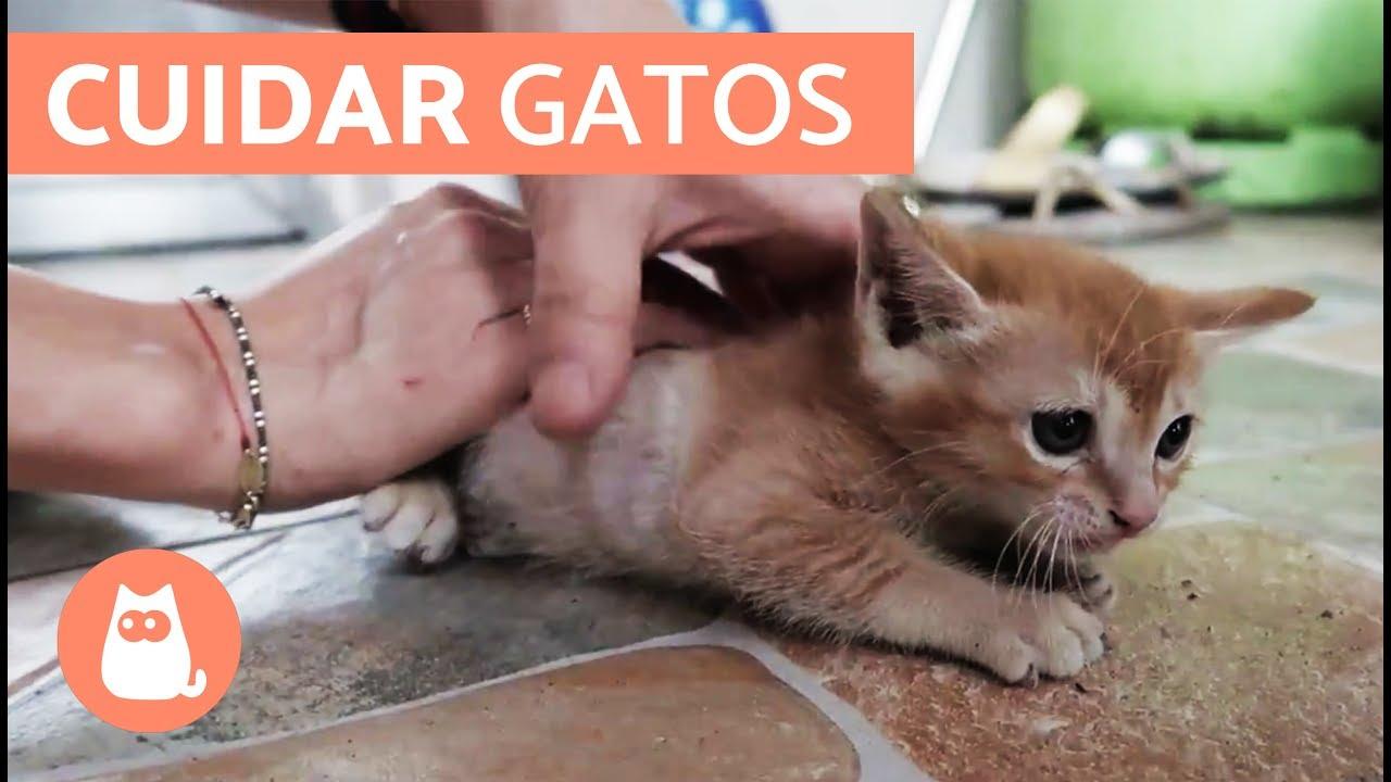 fogyás los gatos)