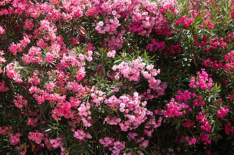 virágzik fogyás dft