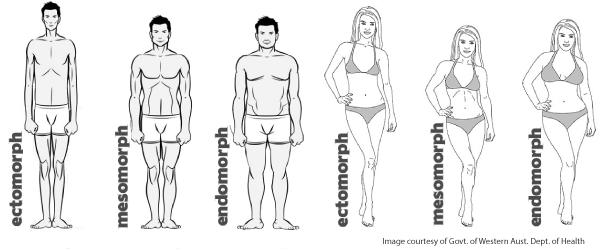 testtípus zsírégetés