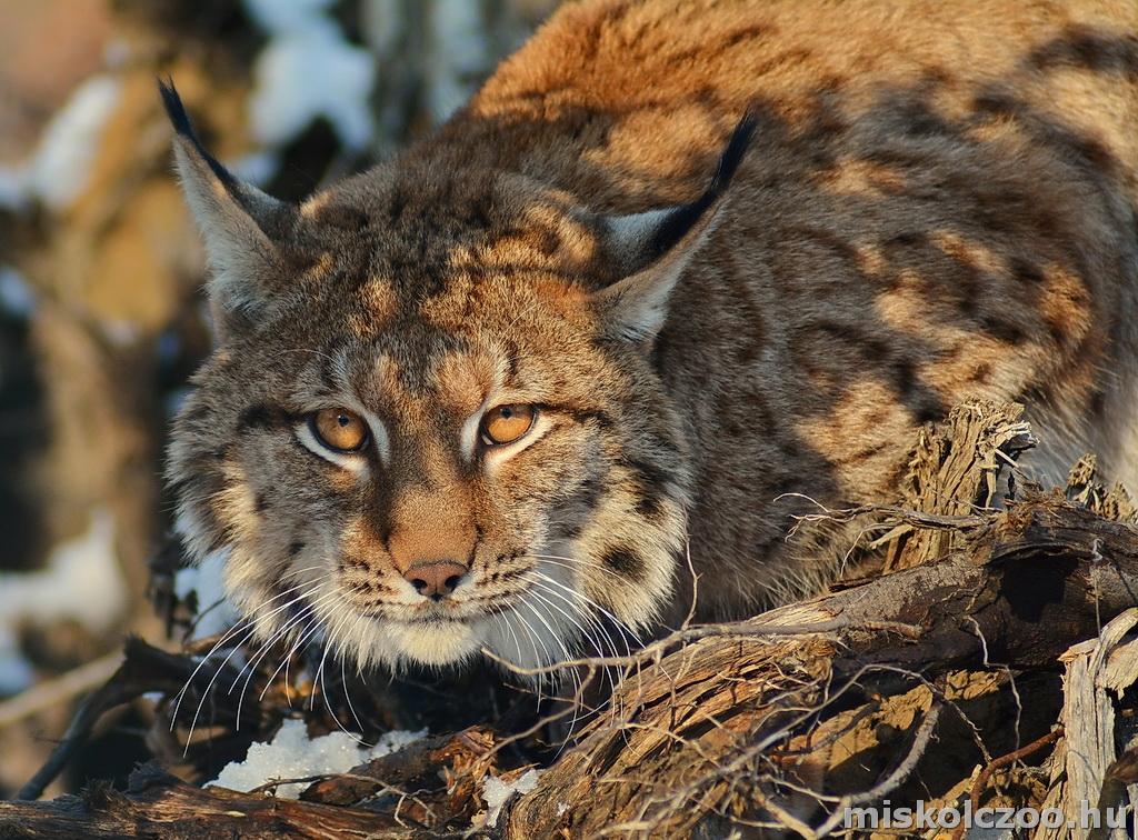 WWF jelentés bolygónkról | National Geographic
