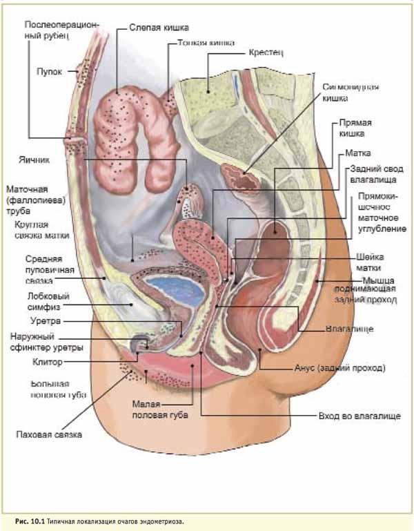 A lupus tünetei lefogynak