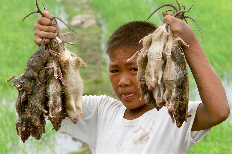 fogyni Kambodzsában segíthet a B6 fogyásban