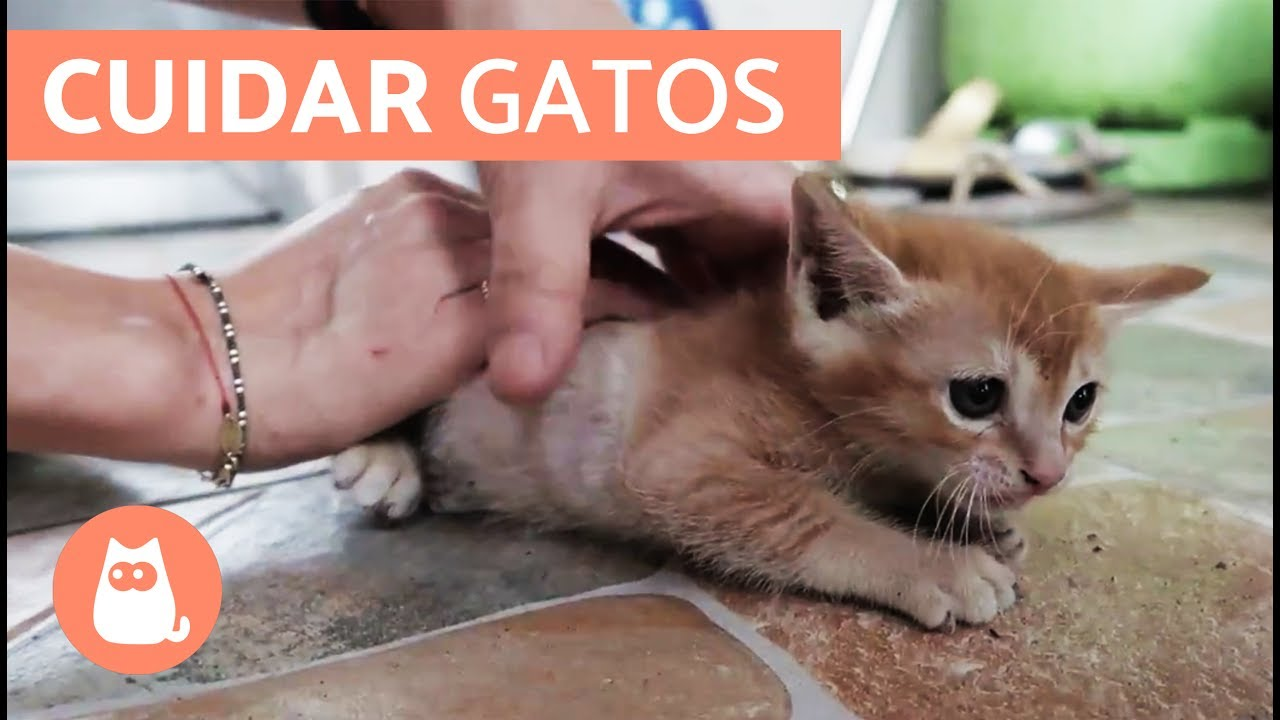 Hogyan kell kezelni a psoriasist a hazban. feltetelei - abisa.hu, Remedio giardia gatos
