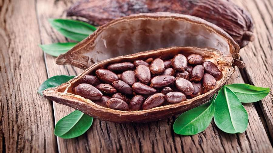Kakaópor - egészségügyi előnyök és károk - Zöldségek July