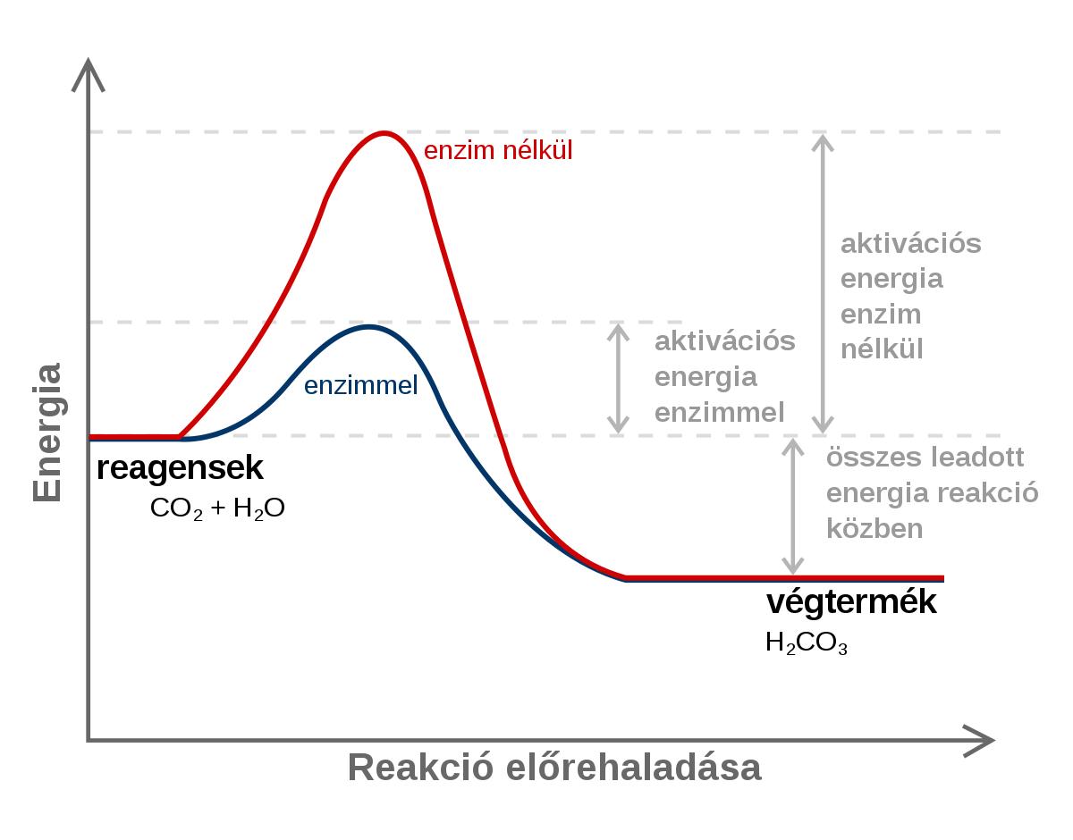 enzim a mély zsír eltávolítására)