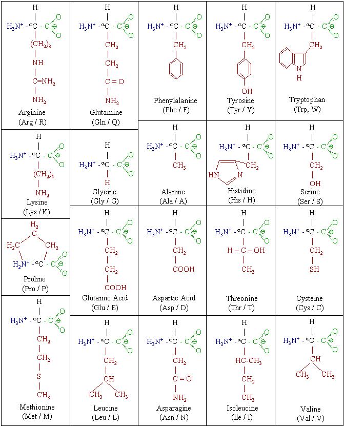 Aminosav komplex (17 féle) mg - 60 db 1db/46,5ft - Fűben-Fában bio webáruház