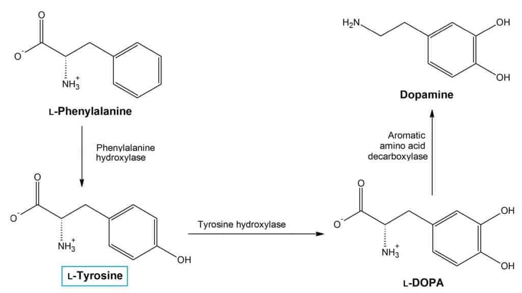 n- acetil- l- tirozin a fogyáshoz fogyás 6 éves korban