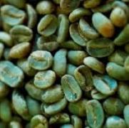 zsírégető kávébab