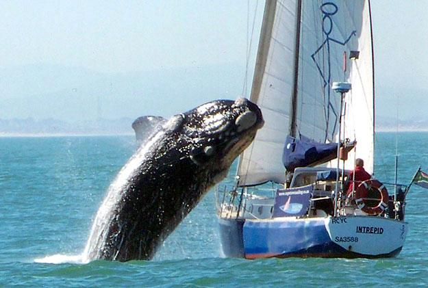 bálna fogyás)