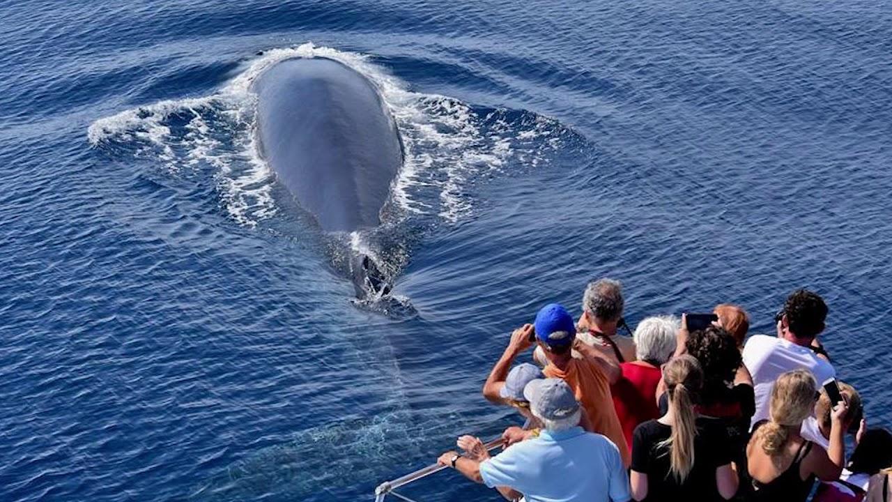 bálna fogyás