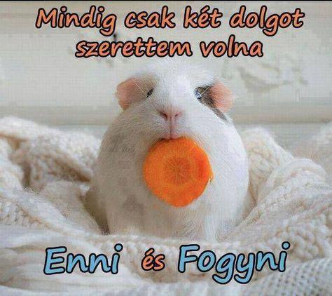 fogyni ms)
